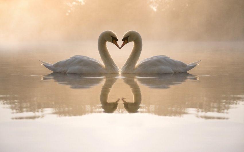 14 febbraio, la forza dell'innamoramento